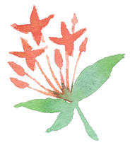 Plant_39.png