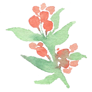 Plant_31.png