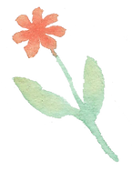 Plant_40.png