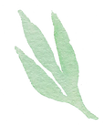 Plant_35_edited.png