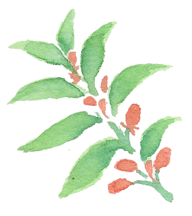Plant_30.png