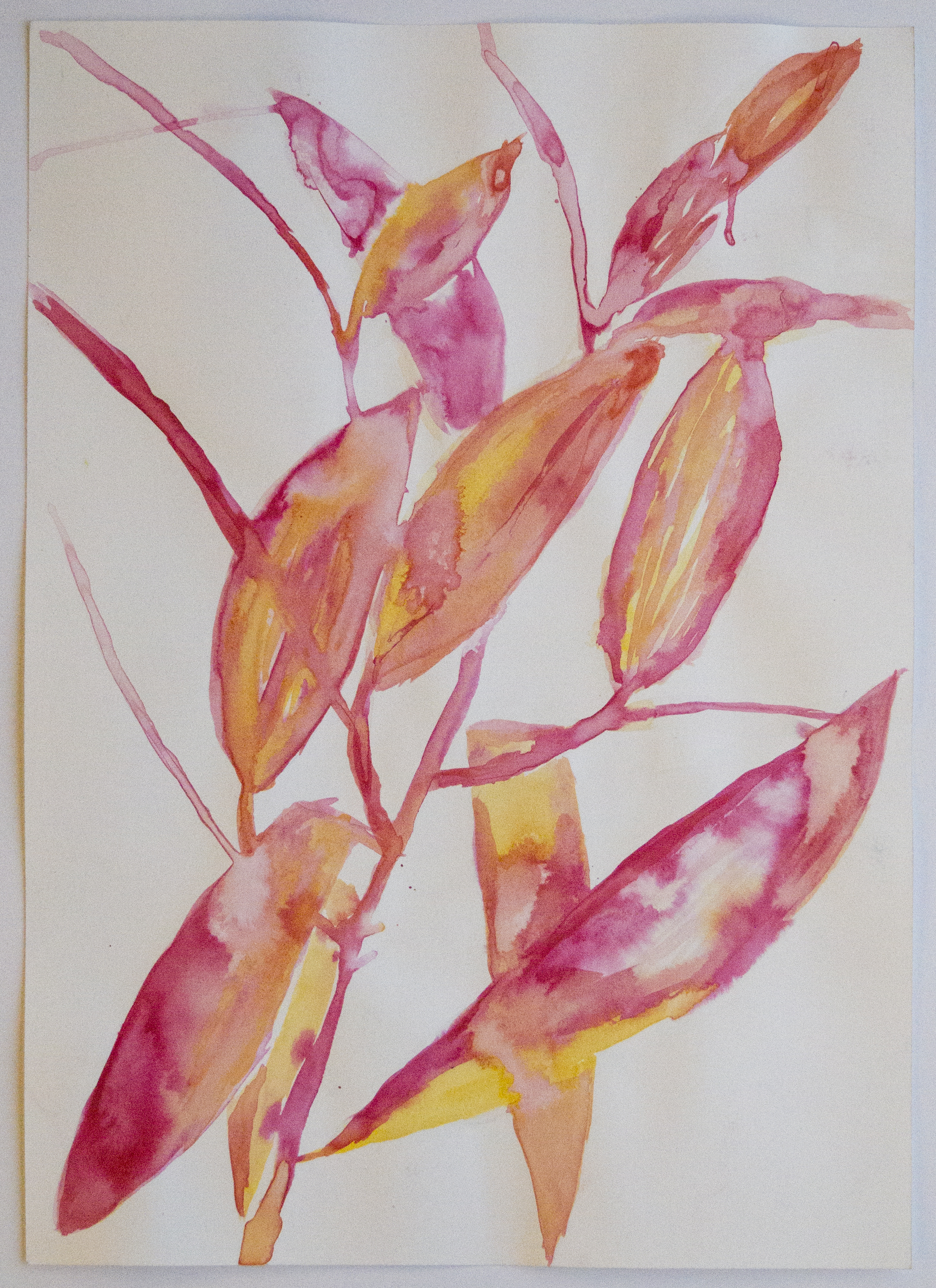 Lily Puds and Leaves