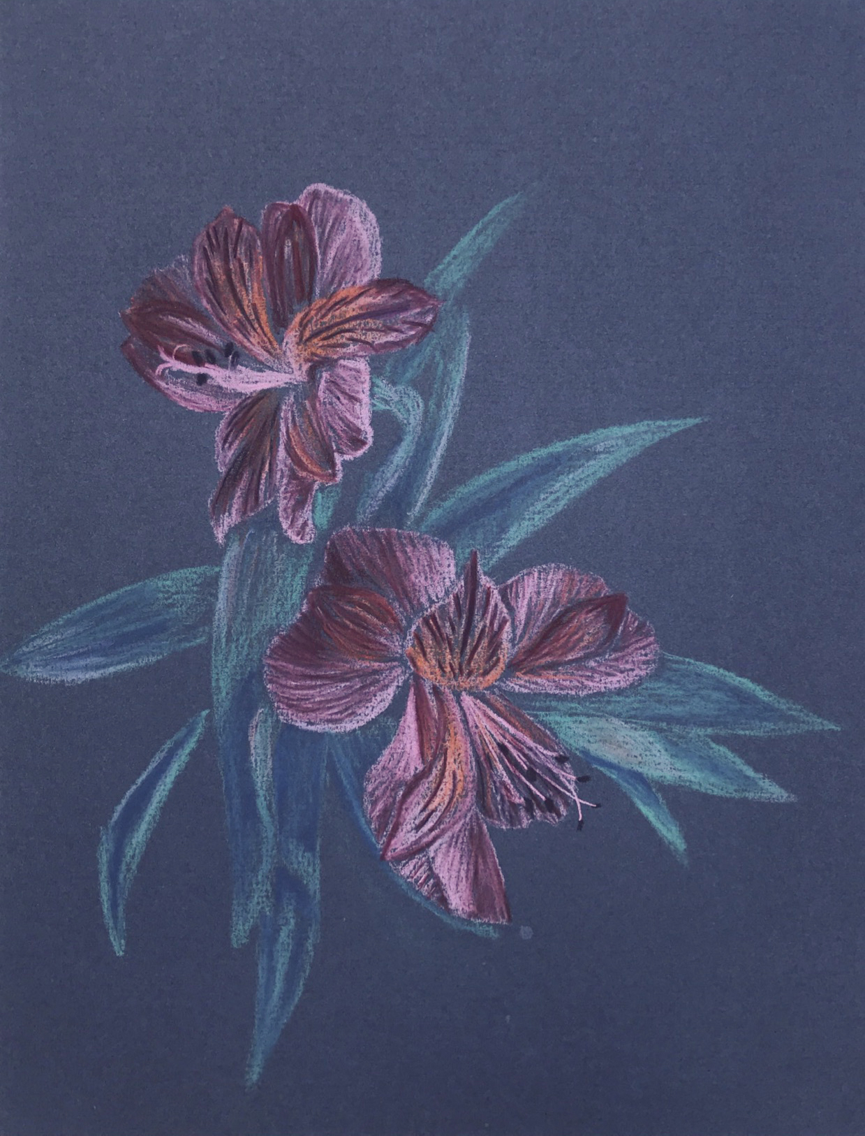 Alstremirium flowers - chalk