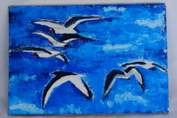 Oystercatchers over water