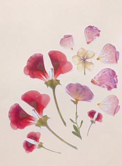 Collage of photocopied pressed flowers