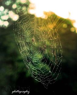 miss_spider.jpg