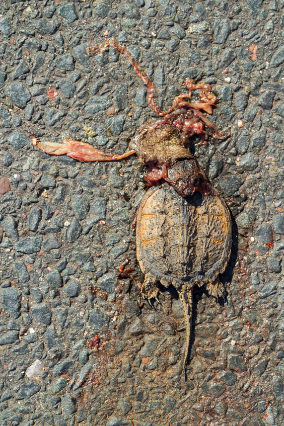 Gross Negligence - Little Turtle_14.jpg