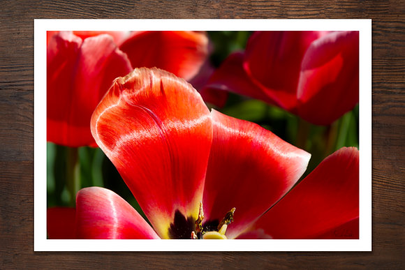"""Red for Spring 13""""x19"""" Print"""