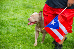 Hartford Puerto Rican Day Parade 2018_16