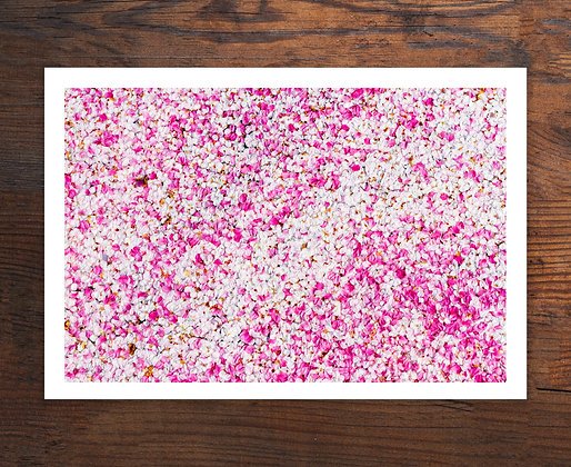 "Cherry Blossoms on Bushnell Pond 13""x19"" Print"