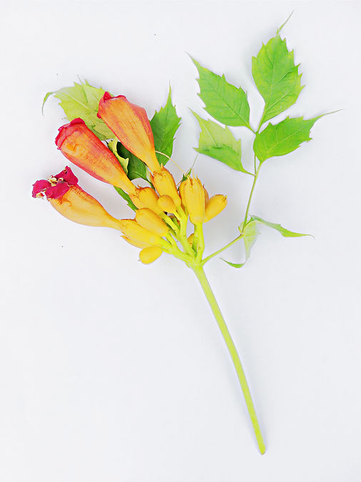 The Sweetest Bouquet.jpg