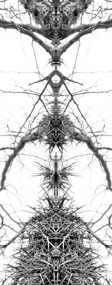 Violent Nature Mirror 1.jpg