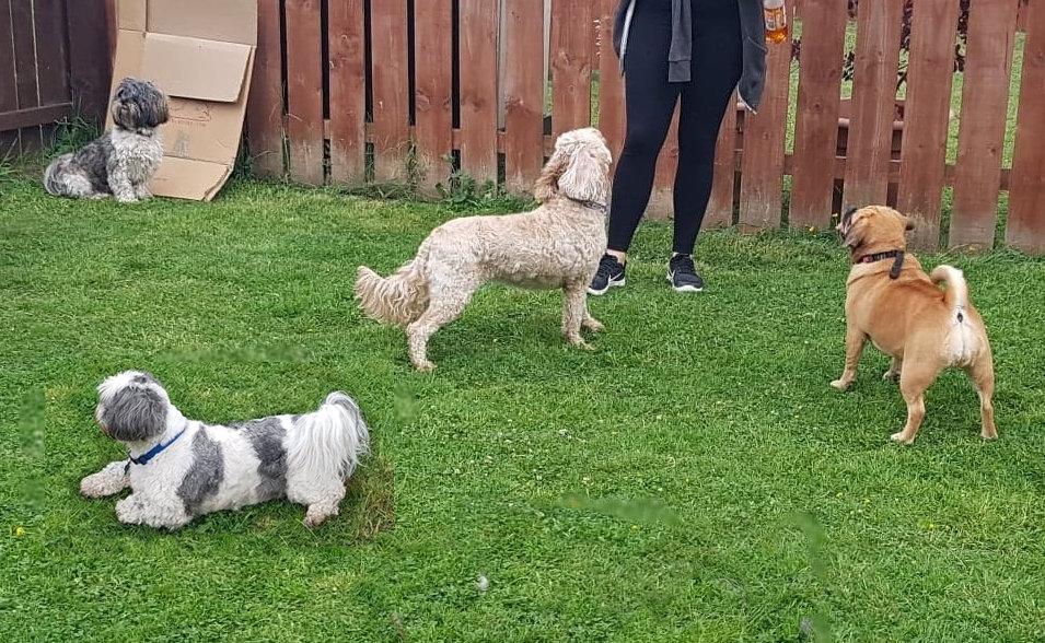Glasgow Dog Walker