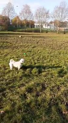 Dog Walker Bellahouston Park