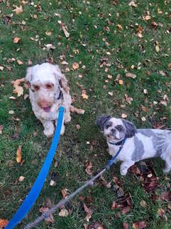 Dog Walker Garnethill