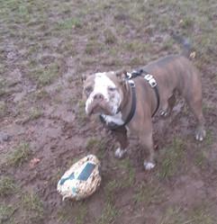 Dog Walker Glasgow Green