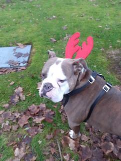 Dog Walker Charing Cross