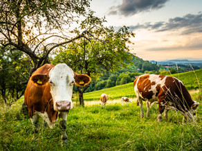 Grass Fed Meat: the new frontier of sustainability