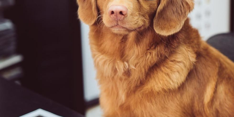 Info. avond allergietherapie voor dieren (new)