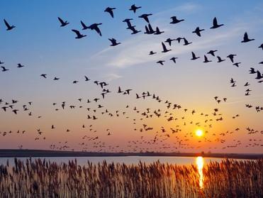 Burung Yang Sama Bulunya, Berkumpul Bersama…