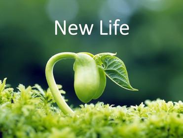 Hidup yang Baru