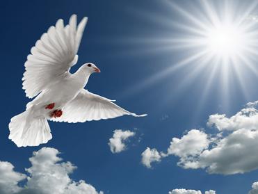 Hidup Dipimpin Roh Allah