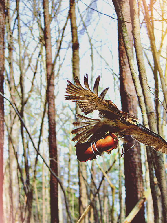 Hawk resized.png