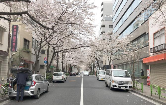 2017櫻
