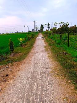 Path In Farm