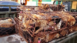 And you thought dog meat is not consumed in your country [VIDEO]