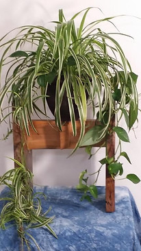 MinMod Plant Stand
