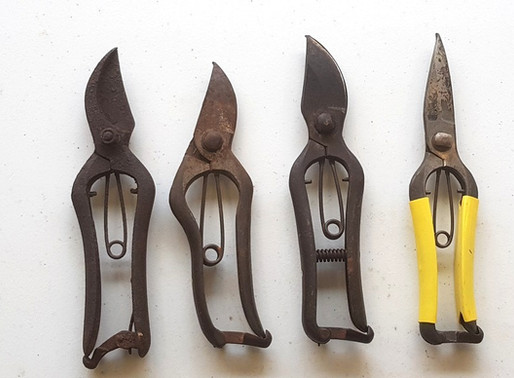 FAQ – What should I do about rust/tarnish on my secateurs?