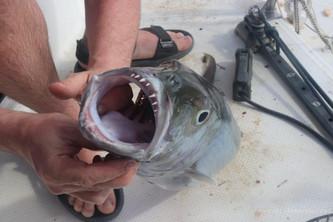 рыба на Сейшелах.jpg