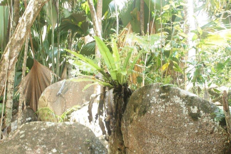 джунгли сейшелы
