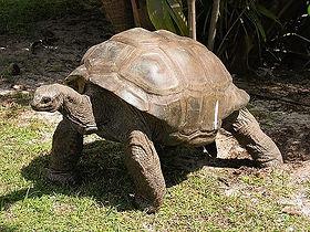 Курьез черепаха_edited.jpg