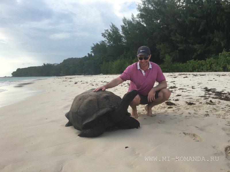 черепахи в естественной среде на Сейшелах