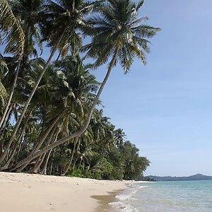 пальмы Таиланд пляж.jpg