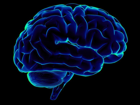 Translate the Brain - Upcoming Workshop