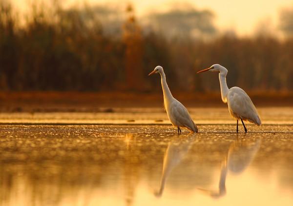 river-oak-gallery-birds.jpg