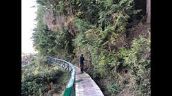 Trail cutter