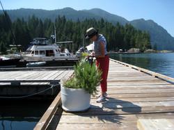 Watering the herbs at Ekins