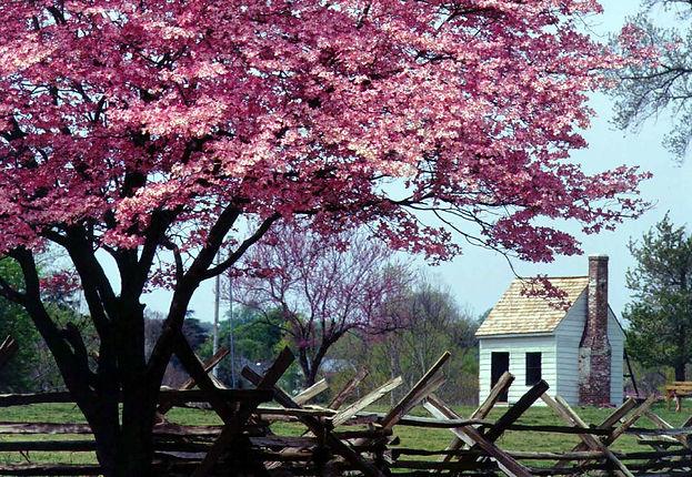 cherry tree stafford.jpg