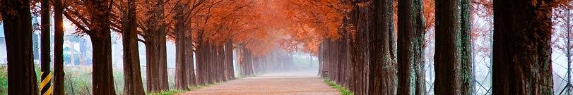 sliver - Fall roadway.jpg