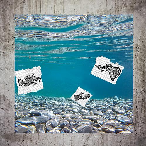Overfishing Scenario
