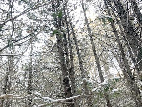 The Cedar Swamp