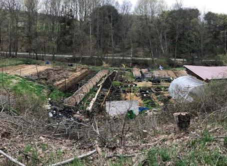 A Trip to Twisted Tree Farm