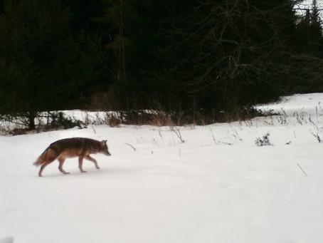 Creeping on Wildlife II