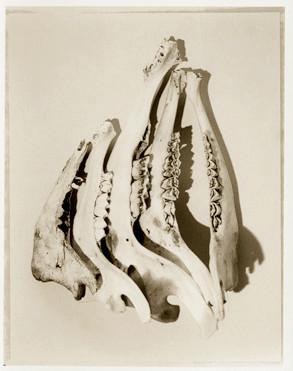 Bones no. 5.jpg