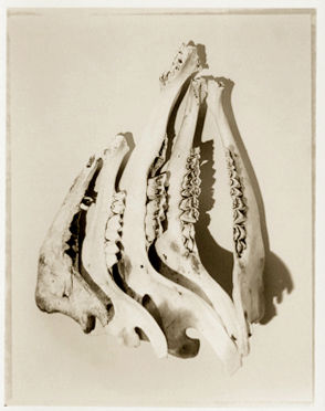 Bones no. 5