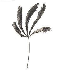 Leaf # 22